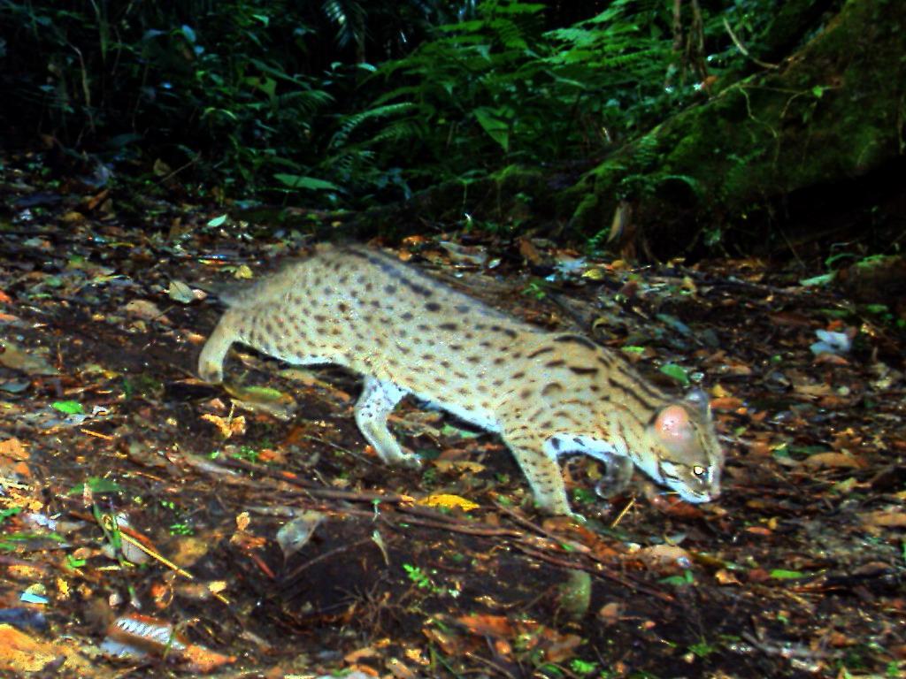 Kucing Hutan Stop Global Warming